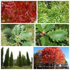 5Pcs Oak Trees Seeds Quercus 10 Kinds Beautiful Fragrant Perennial Garden Plants