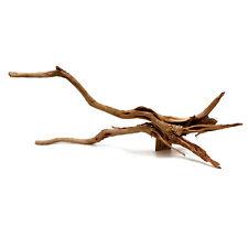 Pine Spider Wood XL SR Aquaristik
