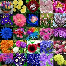 5-10000pcs Mix Beautiful Garden Flower Bulbs Spring Summer Perennial Plant Seeds