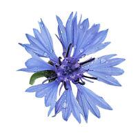 Blaue Kornblume -Centaurea cyanus- 1000 Samen    🐝Für Wildbienen und Hummeln 🐝