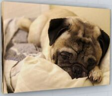 STUNNING PUG DOG CANVAS PICTURE PRINT WALL ART CHUNKY FRAME LARGE 2113-2