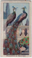 Peacock and Peahen  Bird  Care Housing Feeding 1920s Ad Trade Card