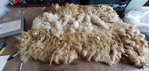 "Raw Sheep Fleece Spinning Weaving Stuffing : White Welsh Mt 1.8kg St=5.5"" (392)"