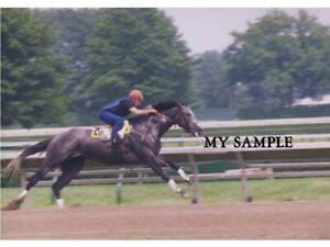 """RARE VINTAGE HOLY BULL 1994 MONMOUTH PARK HORSE TRACK WORK OUT 8"""" X 10"""" PHOTO #5"""