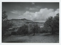 Collectible postcard with fineart photograph by Pavel Apletin Vulture Italy