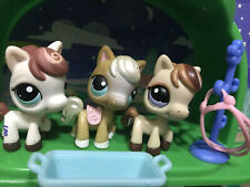 Littlest Pet Shop Pony / Horse Lot 00006000  Hasbro Lps With Accessories
