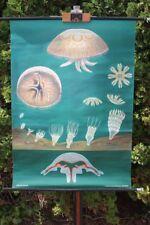 Rollkarte Schulwandkarte Wandkarte Ohrenqualle Karte  Schulkarte Lehrkarte
