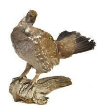 Taxidermy, Blue Grouse on Log Mount, 20th Century, Handsome Home Decor!