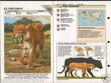 Smilodon tigre dents sabre saber-toothed Tiger Prehistoric animal FICHE FRANCE