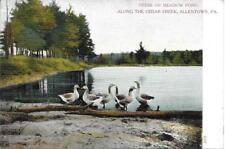 Geese on Meadow Pond, Cedar Creek, Allentown Pa Handsome Vintage postcard unused