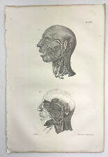 "Antique Original 1831 Human Anatomy Medical Print - 20.5""x13.75"" - Head Study"