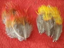 lot 20 plumes faisan doré jaune et rouge