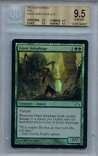 Giant Adephage MTG MAGIC GtC Gatecrash English Adephaga Gigante