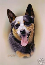 Robert J. May Head Study - Australian Cattle Dog (Rmdh006)