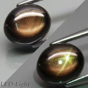 4.45Ct.Perfect Sharp 6Rays Natural Golden Black Star Sapphire BangKacha,Thailand