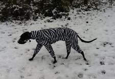 "Dog pyjamas made to measure sleepsuit whippet greyhound up to 34"" fleece +free"