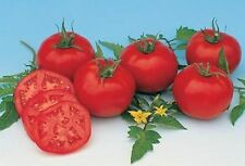 Moskvich  Heirloom Tomato 20 Seeds Moon Gardens Simply Grown Beautifully