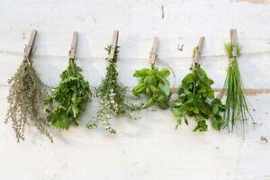 6 x Mixed Garden Herb Plug Plants