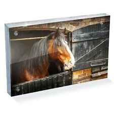 "Beautiful Shire Horse Photo Block 6 x 4"" - Desk Art Office Gift #12685"