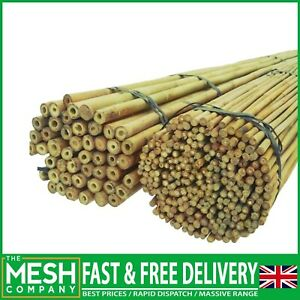 Heavy Duty Strong Bamboo Canes Plant Support Many UK Sizes 2ft - 6ft Length