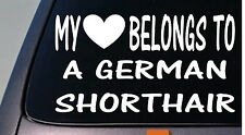 My heart belongs to a German Shorthair Pointer sticker decal *D982*