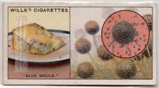 Blue Mold On Food Is A Fungus 80+ Y/O Ad Card