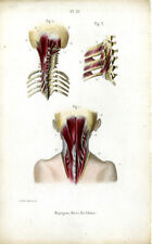 Antique Print-MEDICAL-NECK MUSCLES-Masse-1843