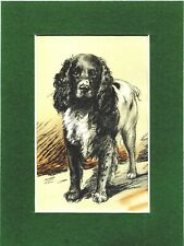 Lucy Dawson ~ Springer Spaniel ~ Gundogs Colour Print Genuine Vintage 1946