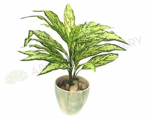 NEW Artificial Flowers/Plants SP0209 Calathea Plant 68cm Real Touch