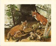 American Red Fox   - Gene Gray Vintage Art Card - Old Stock