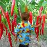 20x seltene riesig Gewürze Spicy rot Chili Gemüse Pflanzen Samen Garten Suprem