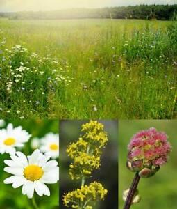 2.00 to 20.00 Kg Bulk Economy WILDFLOWER MEADOW SEEDS. Native British Species