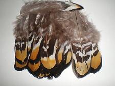 lot de 10 plumes faisan vénéré  10  cm