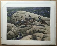 Vintage CALIFORNIA QUAIL Don R. Eckelberry 1976 Signed Limited Edition Print