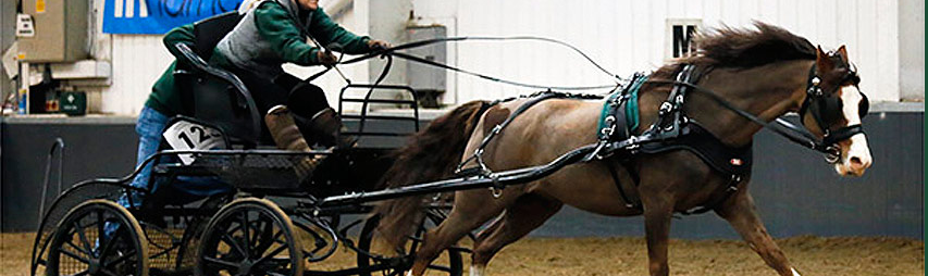 carriagedriving-harness