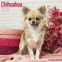 Chihuahua Calendar 2020 Premium Dog Breed Calendars