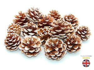 FROSTED Natural Pine Cones Approx 60 Per kg Quality Pinecone's Florists Cone UK