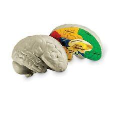 Children's Anatomy Model of the Brain Cross-Section Soft Foam  LFA #L1006