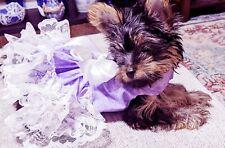 Dog harness Dress  PURPLE WITH WHITE  RUFFLES NEW FREE SHIPPING