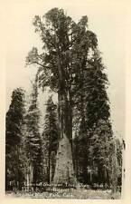 1940 SEQUOIA NATIONAL PARK CA Gen. Sherman Biggest Tree RPPC REAL PHOTO postcard