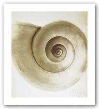 Snail Shell Michael Mandolfo Art Print 12x11