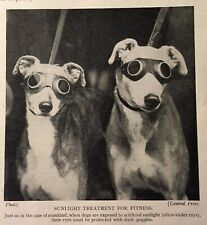 1934-35 Greyhounds With Sunglasses - Matted Print