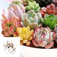 100x Mixed Succulent Seeds Lithops Rare Living Stones Plants Cactus Home Plant