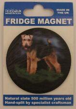 Welsh Terrier - Fridge Magnet - Welsh Slate