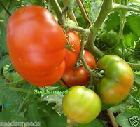 Super Marmande Tomato Seeds  Heirloom