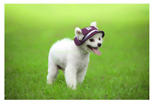 Lovely Pet Dog Hats Hat Sports Windproof Travel Sun Hats for Puppy Large Dogs