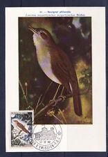 cma/ carte maximum  Monaco  rossignol   oiseaux  1962