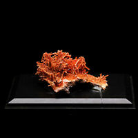 Natural Crocoite Crystals Mineral Specimen, Tasmania, Australia