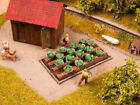 Noch 13217 White Cabbage 16 plants HO OO