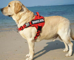 Pet Dog Padded Service Harness Reflective With Handle & 2 Free Tags Puppy Vest